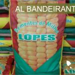 sementes-lopes-milho-al-bandeirante-variedade